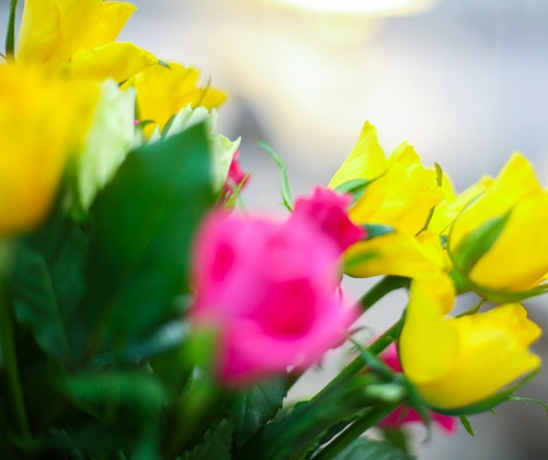CLP flower 500x420